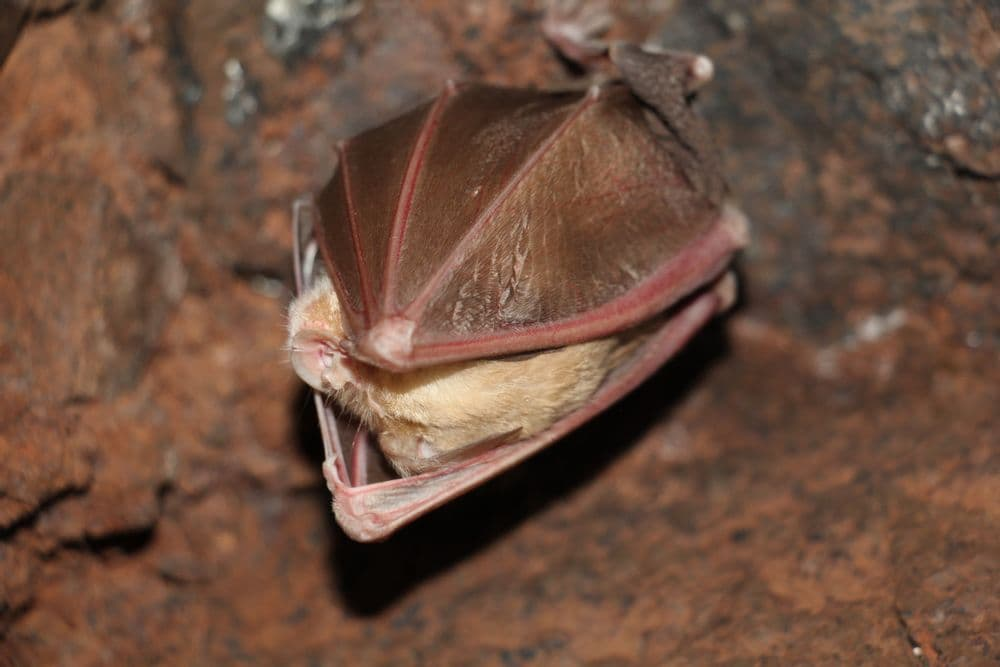 Экскурсия в пещеру «7 Дрнавор» | Bustourma
